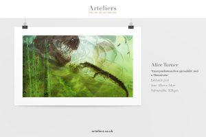 AVS Turner - Koumpiodontosuchus