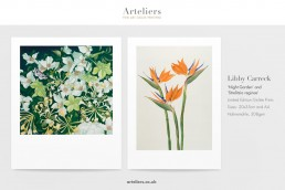 Libby Carreck Night Garden and Strelitzia